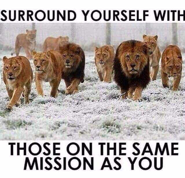 surround like minded