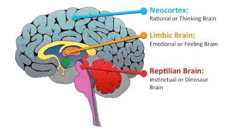 reptile brain in stocks investing
